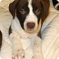 Adopt A Pet :: Henna - Towson, MD