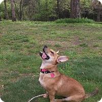 Adopt A Pet :: Frito - Acworth, GA