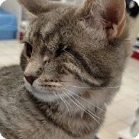 Adopt A Pet :: Punkin - Buhl, ID