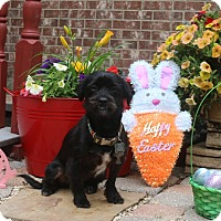 Adopt A Pet :: Tifanny - Coppell, TX