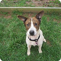 Adopt A Pet :: Molly - Cincinnati, OH