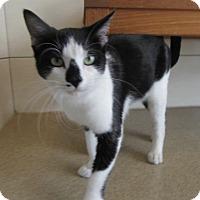 Adopt A Pet :: Chaplin $25 to adopt - North Richland Hills, TX