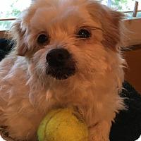 Adopt A Pet :: Leo - San Francisco, CA