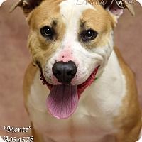 Adopt A Pet :: Monte - Newnan City, GA