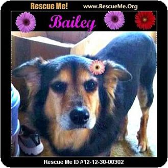 Australian Shepherd Mix Dog for adoption in Scottsdale, Arizona - Bailey