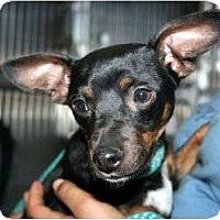 Adopt A Pet :: Jackson - Canoga Park, CA