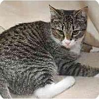 Adopt A Pet :: Ingred - Port Republic, MD