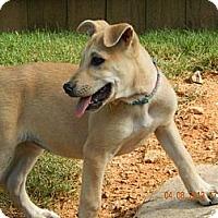 Adopt A Pet :: Rayna - Dacula, GA
