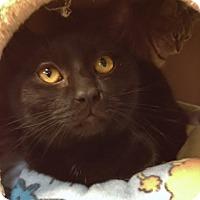 Adopt A Pet :: Orion - Byron Center, MI