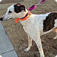 Adopt A Pet :: Tamsen - Oklahoma City, OK