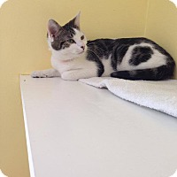 Adopt A Pet :: Lilly - Lancaster, MA