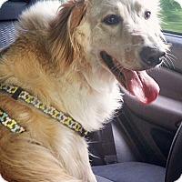 Adopt A Pet :: Charley IV - BIRMINGHAM, AL