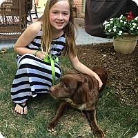 Adopt A Pet :: Maggie Mae - East Sparta, OH