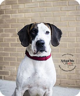 Hound (Unknown Type) Mix Dog for adoption in Charlotte, North Carolina - Brogan