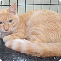 Adopt A Pet :: Shanyu - Reeds Spring, MO