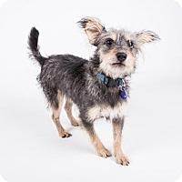 Adopt A Pet :: Nemo - Atlanta, GA