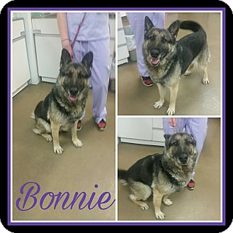 German Shepherd Dog Dog for adoption in Steger, Illinois - Bonnie