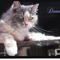 Adopt A Pet :: Donna - Calimesa, CA