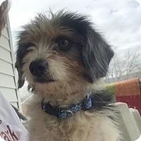 Adopt A Pet :: Dixie (ETAA) - Harrisonburg, VA