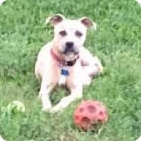 Adopt A Pet :: Sabrina - Fort Collins, CO