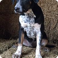 Adopt A Pet :: Charlie - Russellville, KY