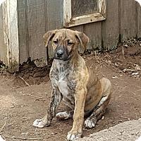 Adopt A Pet :: Fabric babies - Blue Bell, PA