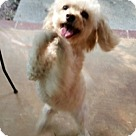 Adopt A Pet :: Cookie CG in MS