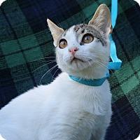 Adopt A Pet :: Star - Ocean Springs, MS