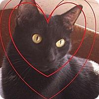 Adopt A Pet :: Cutter - Madisonville, LA