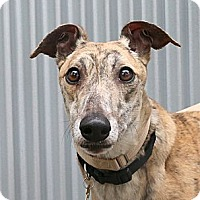 Adopt A Pet :: Talley - Santa Rosa, CA