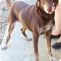 Adopt A Pet :: Bennie - Toronto/Etobicoke/GTA, ON