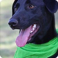 Adopt A Pet :: Junebug - Albany, NY