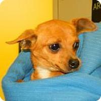 Adopt A Pet :: Tina - Jacksonville, FL