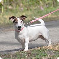 Adopt A Pet :: Lois - Ormond Beach, FL