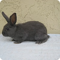 Adopt A Pet :: Blue - Bonita, CA