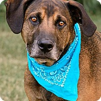Adopt A Pet :: Regis - ADOPTED! - Zanesville, OH