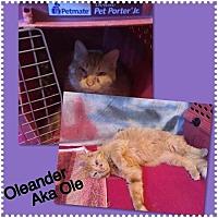 Adopt A Pet :: Ole - Surprise, AZ