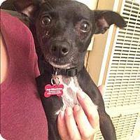 Adopt A Pet :: Amigo - Encino, CA