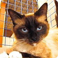 Adopt A Pet :: Izidora - Davis, CA