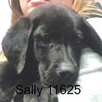 Adopt A Pet :: Sally - Greencastle, NC