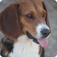Adopt A Pet :: B-I-N-G-O - Hooksett, NH