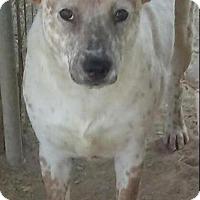 Adopt A Pet :: Mami - Las Vegas, NV