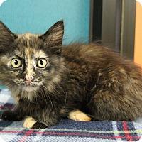 Adopt A Pet :: Blossom - Benbrook, TX