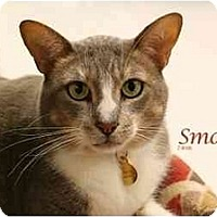 Adopt A Pet :: Smokey Joe - Yorba Linda, CA