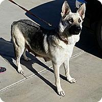 Adopt A Pet :: Pebbles - Victorville, CA