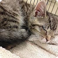 Adopt A Pet :: Junior - Pittstown, NJ