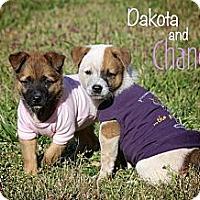Adopt A Pet :: Chance - Albany, NY