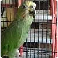 Adopt A Pet :: JERRY - Mantua, OH