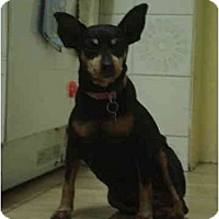 Adopt A Pet :: Petals - Toronto/Etobicoke/GTA, ON