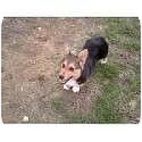 Adopt A Pet :: Dylan - Murfreesboro, TN